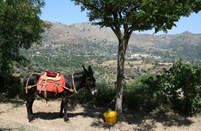Corsica donkey parking